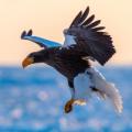 動物/鳥類的圖片